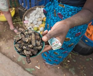 This project in Africa promotes edible insects, here's why