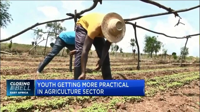 This is what Rwanda is doing to attract its youth into agriculture