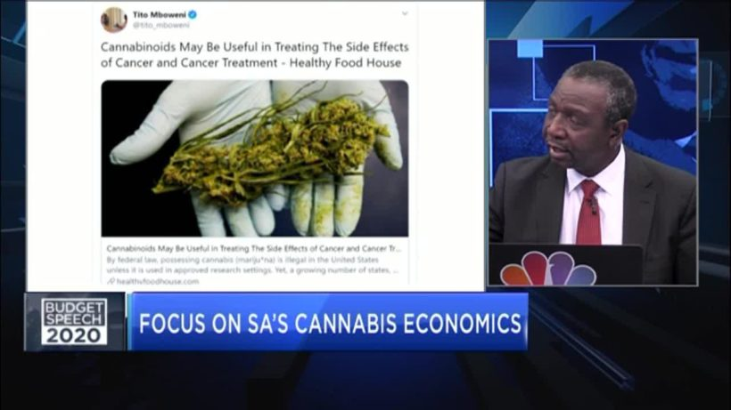 Unpacking SA's bold plans to tap into the cannabis market