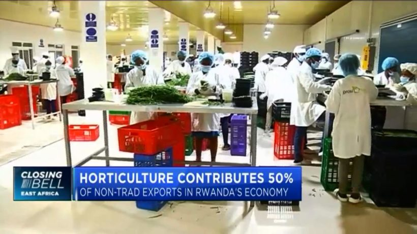 Rwandan horticulture targets $130mn in annual export revenue by 2024
