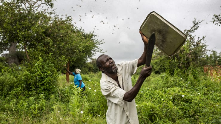 A local resident tries to swot away a swarm of desert locusts in Mathiakani, Kitui County, Kenya, on Saturday, Jan. 25, 2020. The number of locusts in East Africa could expand 500 times by June, the UN's Food & Agriculture Organization said last month.