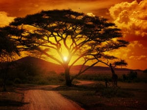 How to grow a fortune in the golden fields of Africa.