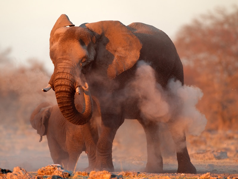 Kenya elephant numbers more than double in 1980-2018: tourism minister