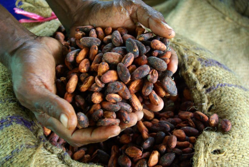 Pact to aid poor cocoa farmers in peril as COVID-19 hits demand