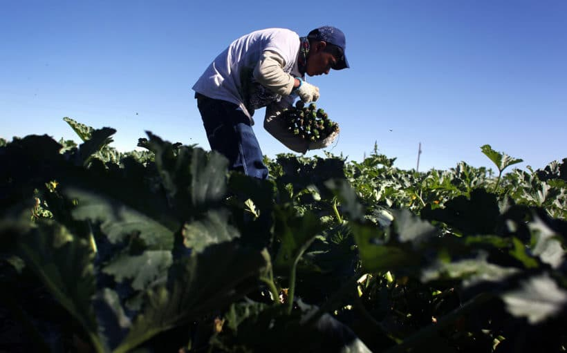We must give women a chance to build back a better food system