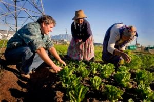 Agricultural Entrepreneurship Is Key to Unleashing the Full Potential of Africa's Rural Areas