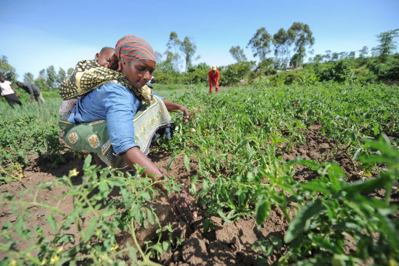 Africa's Food Challenges Will Intensify Absent Major Investments in Climate-Resilient Farms